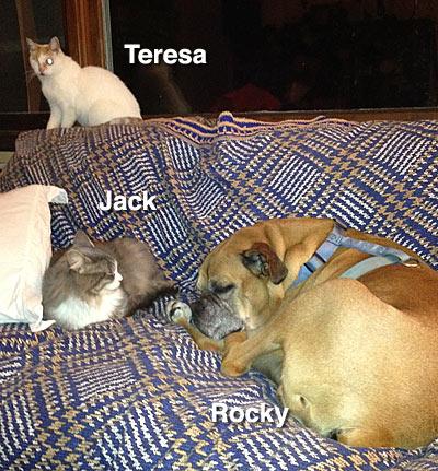 Rocky-Jack-Teresa