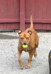 Sally playing ball - Lynne