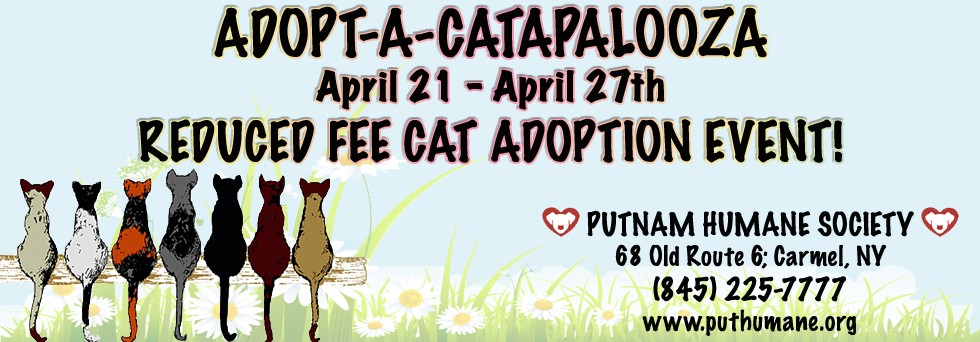 Reduced Rate Cat Adoption Event