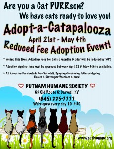 Cat Adoption Event April 2014 Extended