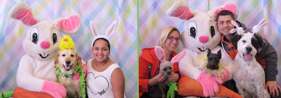 Pet pictures with the Easter Bunny!