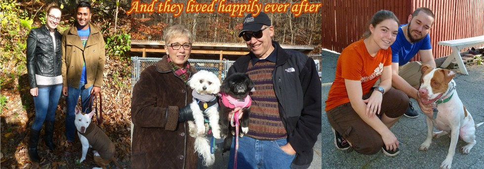 Happily Ever After Adoptions