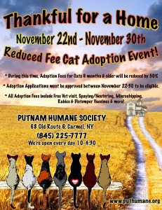 Thanksgiving Reduced Rate Cat Adoption resized