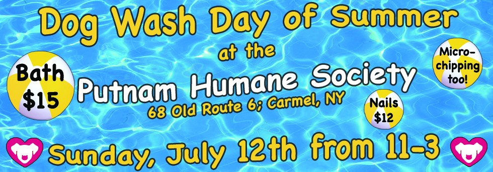 PHS Dog Wash Day of Summer 2015