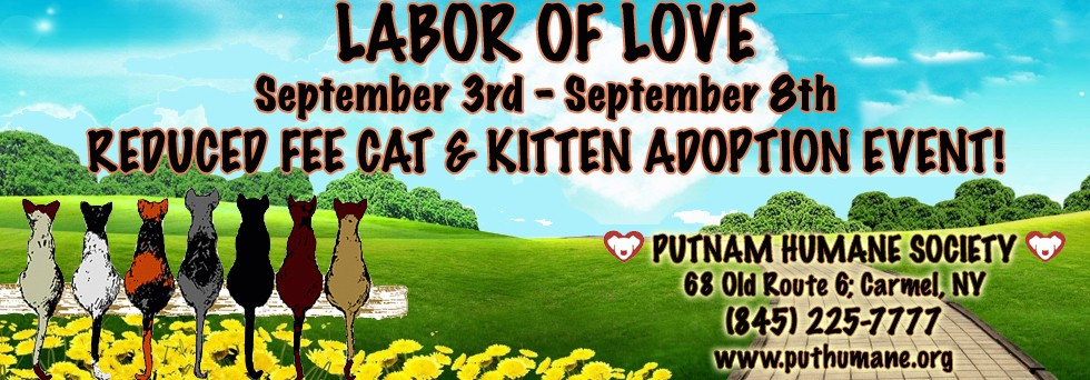 LABOR OF LOVE – Reduced Fee Cat Adoption Event Slider